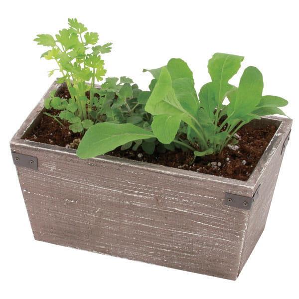 Green&Herbs(ハーブ寄せ植え / サラダ系)