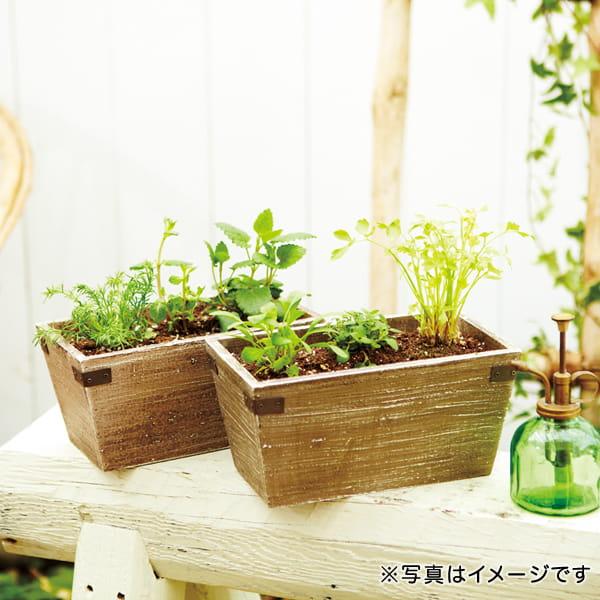 Green&Herbs(ハーブ寄せ植え / ティー系)