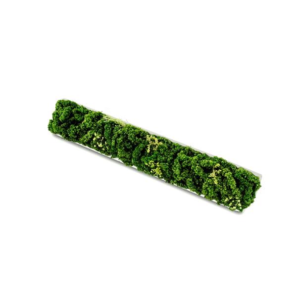 green senses(グリーンセンシス) ACCENT GREEN <アングルS>
