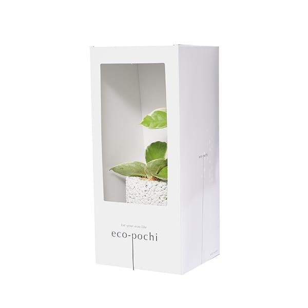 MIDORIKA / エコポチ シリンダー白(ホヤ・カルノーサ)