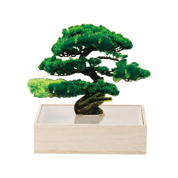 トウメイ 盆栽 ミニ(松)
