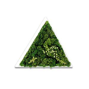 green senses / ACCENT GREEN テトラ
