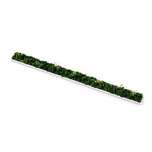 green senses / ACCENT GREEN フラット